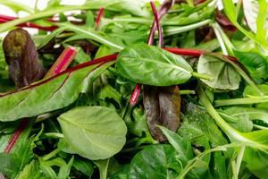 Nahaufnahme eines gemischten Salats mit Mangold, Feldsalat und Spinat