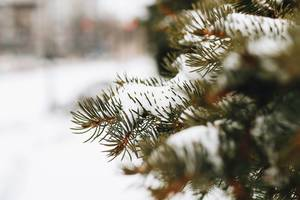 Nahaufnahme eines mit Schnee bedeckten Kieferbaums. Unscharfer Hintergrund