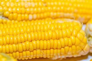 Nahaufnahme von Maiskolben mit deutlich sichtbaren Maiskörnern