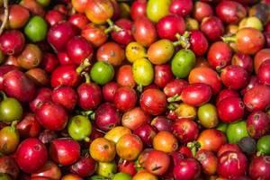 Nahaufnahme von roten und grünen Kaffeebohnen in noch nicht geröstetem Zustand