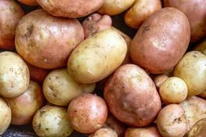 Nahaufnahme zeigt Hintergrundbild mit reiften Kartoffeln in allen Größen