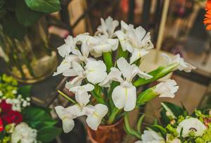 Nahaufnahme zeigt weiße Schwertlilien in einer Vase