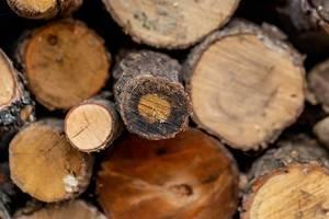 Natur Holz Hintergrund - Feuerholz für den Winter gestapelt