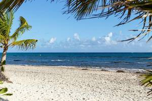 Nature Photo of White Sand Beach with Palm Trees in La Altagracia, Dominican Republic