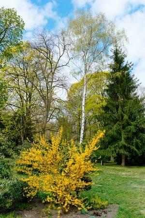 Neuer Friedhof Potsdam mit seinem Friedhofsgarten mit blühenden Bäumen und gelben Sträuchern
