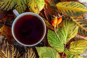 Obene Aufnahme von einer Tasse Tee mit bunten Herbstblättern im Hintergrund