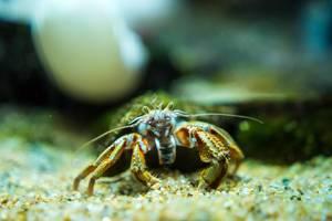 Ocean crab face (Flip 2019)