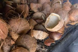 Offene, zerbrochene Kokosnüsse der L