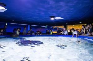 Open aquarium in Tropicarium Budapest