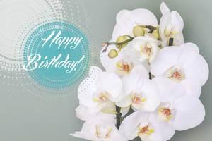 Orchideen für Geburtstag