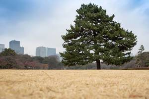Östliche Gärten des Kaiserpalasts Tokio mit Blick auf Wokenkratzer