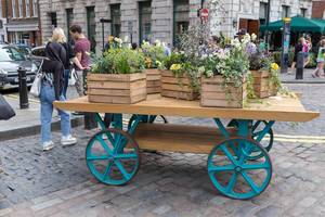 Ox cart with boxes with flowers