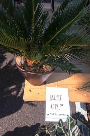 Palm in flowerpot - Street fair, Cologne