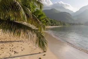 Palmenblatt berührt den Strand Port Glaud neben dem Indischen Ozean auf Mahé, Seychellen