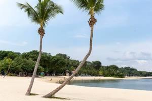Palms at Palawan Beach