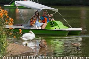 Pärchen im Tretboot fotografiert Schwäne und Enten