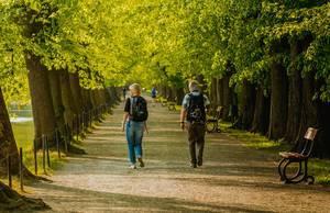 Pärchen spaziert unter einer Allee durch den Park