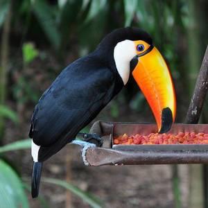 Parque das Aves, Foz do Iguacu #ara #iguazu #parrot #papagei #animals #birds #brasil #picoftheday #instapic #nofilter