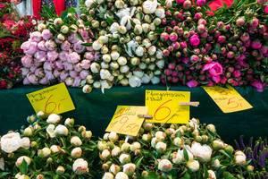 Pfingstrosen verschiedener Farben in einem Blumenladen