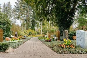 """Pflastersteineweg führt an Grabsteinen vorbei, neben kleebedeckten Baumstämmen, auf dem """"Neuer Friedhof"""" in Potsdam"""