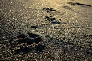 Pfotenabdrücke eines Hundes im Sand am Strand
