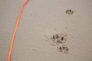 Pfotenabdrücke im Sand und eine orangefarbene Leine