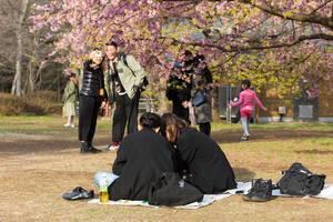 Picnic under Cherry Blossom in Yoyogi Park Tokyo
