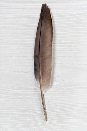 Pigeon feather on white wooden background (Flip 2019)