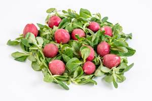Pile of Red Radishes on the Baby Spinach