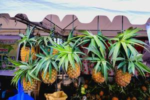 Pineapples hanged for display at a local fruit stand
