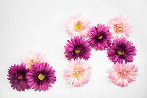 Pink flowers forming the letter M and a dot (Flip 2019)