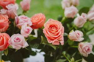 Pink Roses Close Up (Flip 2019)