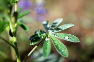 Plant with morning dew