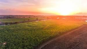 Plantagen bei Sonnenuntergang im fernen Asien - Luftaufnahme