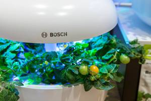 Planting tomatoes in a small indoor garden with Bosch SmartGrow