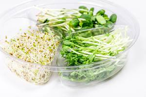 Plastic box with microgreens peas, sunflowers and onions on a white background (Flip 2020)