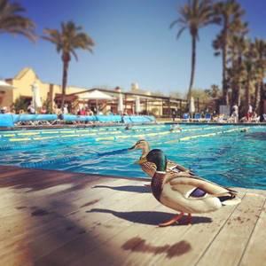 Pollenca Club Ressort. #triathlon #travel #training #swimming #Fitness #sports #mallorca #sun