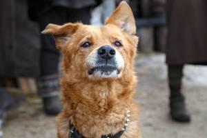 Portrait of brown dog outdoor