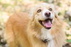 Portrait of happy cur dog