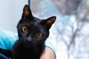 Portraitaufnahme einer schwarzen Katze auf Arm einer Person
