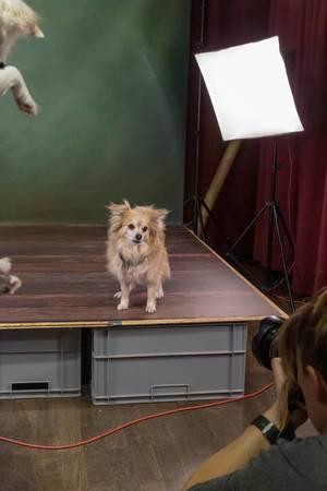 Professionelle Hundefotografie auf einer kleinen Bühne vor einer Fotografin auf der Hundemesse 2019 in Köln