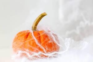 Pumpkin in a Spider Web close-up