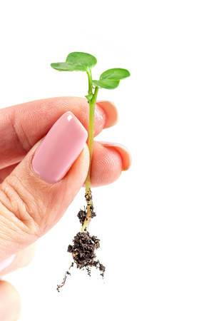 Radish sprout with a root in a woman