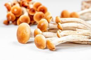 Raw mushrooms on a white background (Flip 2020)