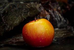 Red apple floating on water