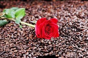 Red rose among coffee beans (Flip 2019)