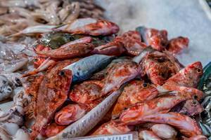 Red scorpionfishes and other fishes on fish market