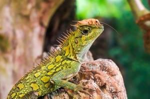 Reptile und Grashüpfer. Freundschaft