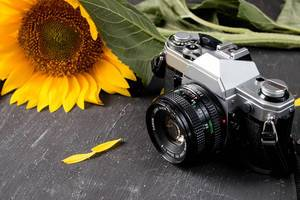 Retro camera and a sunflower