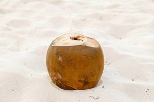 Ripe coconut at the sand
